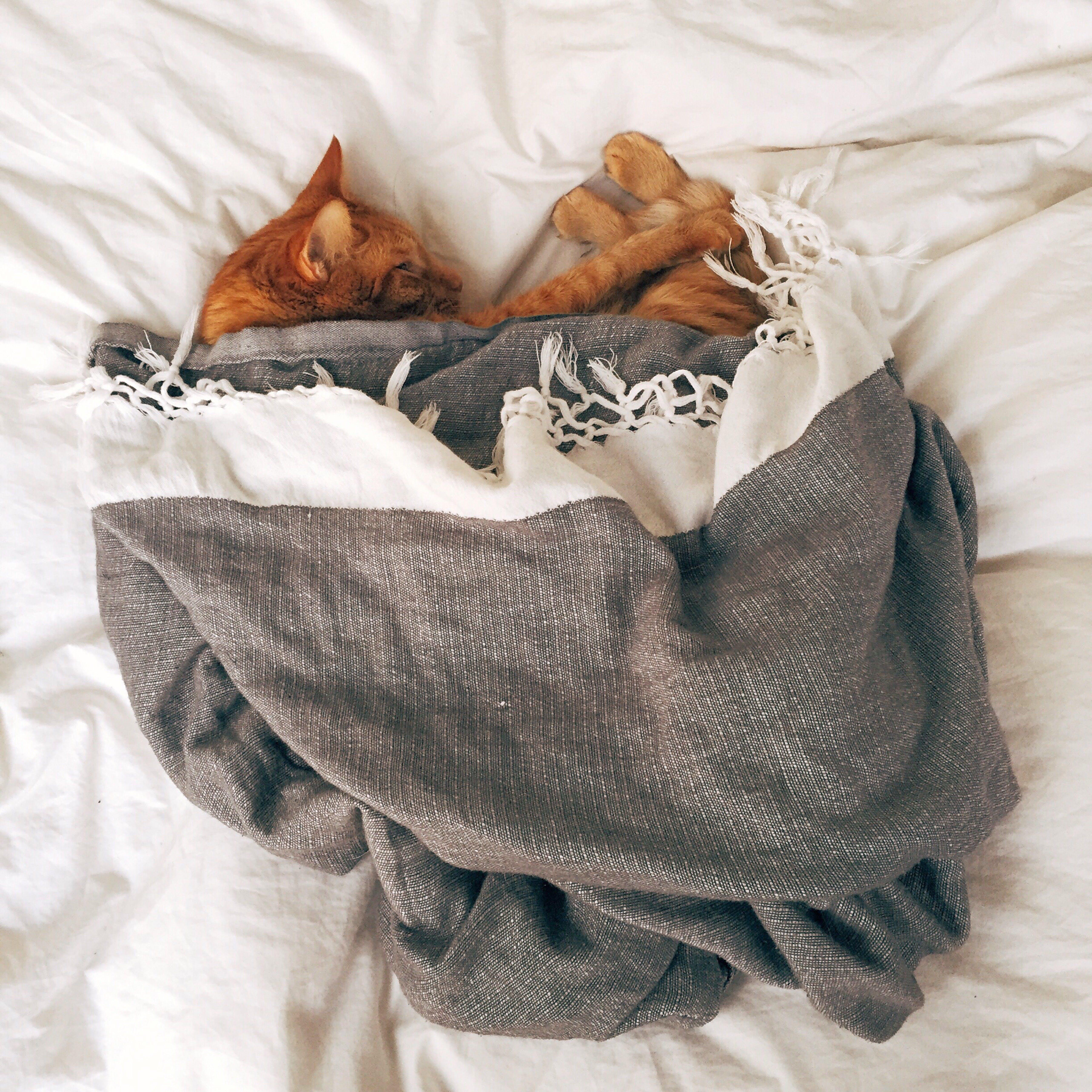 Orange Tabby Cat Sleeping on White Textile