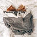 bed, animal, pet