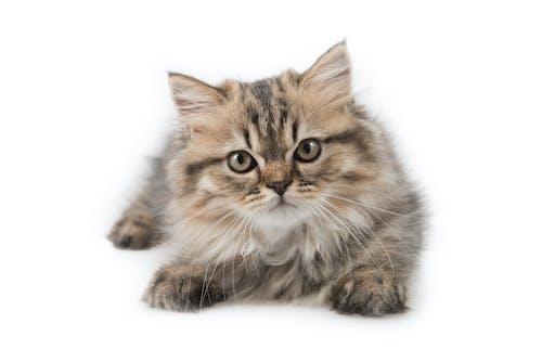 Foto profissional grátis de adorável, animal, atraente, bebê