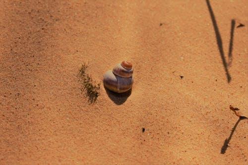 Kostenloses Stock Foto zu gelber sand, muschel, sand, schönheit