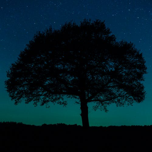 Tree Silhouette Under the Night Photography
