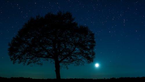 Бесплатное стоковое фото с Астрономия, вечер, голубой, деревья