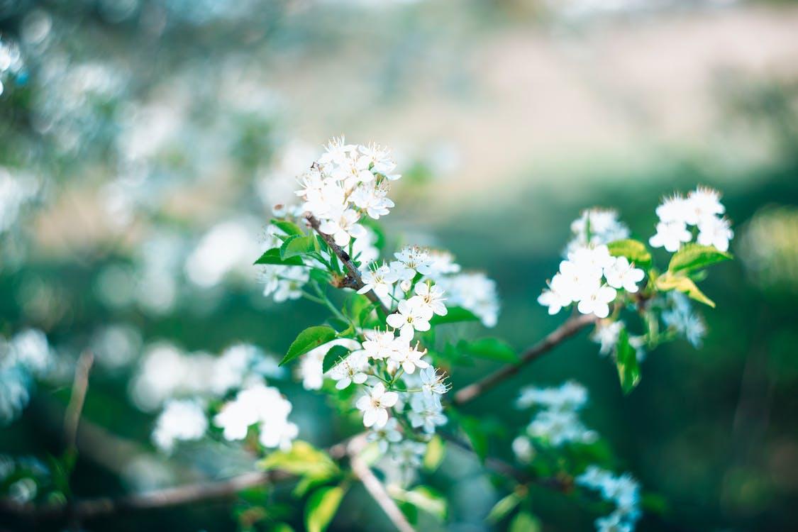 cận cảnh, cánh hoa, hệ thực vật