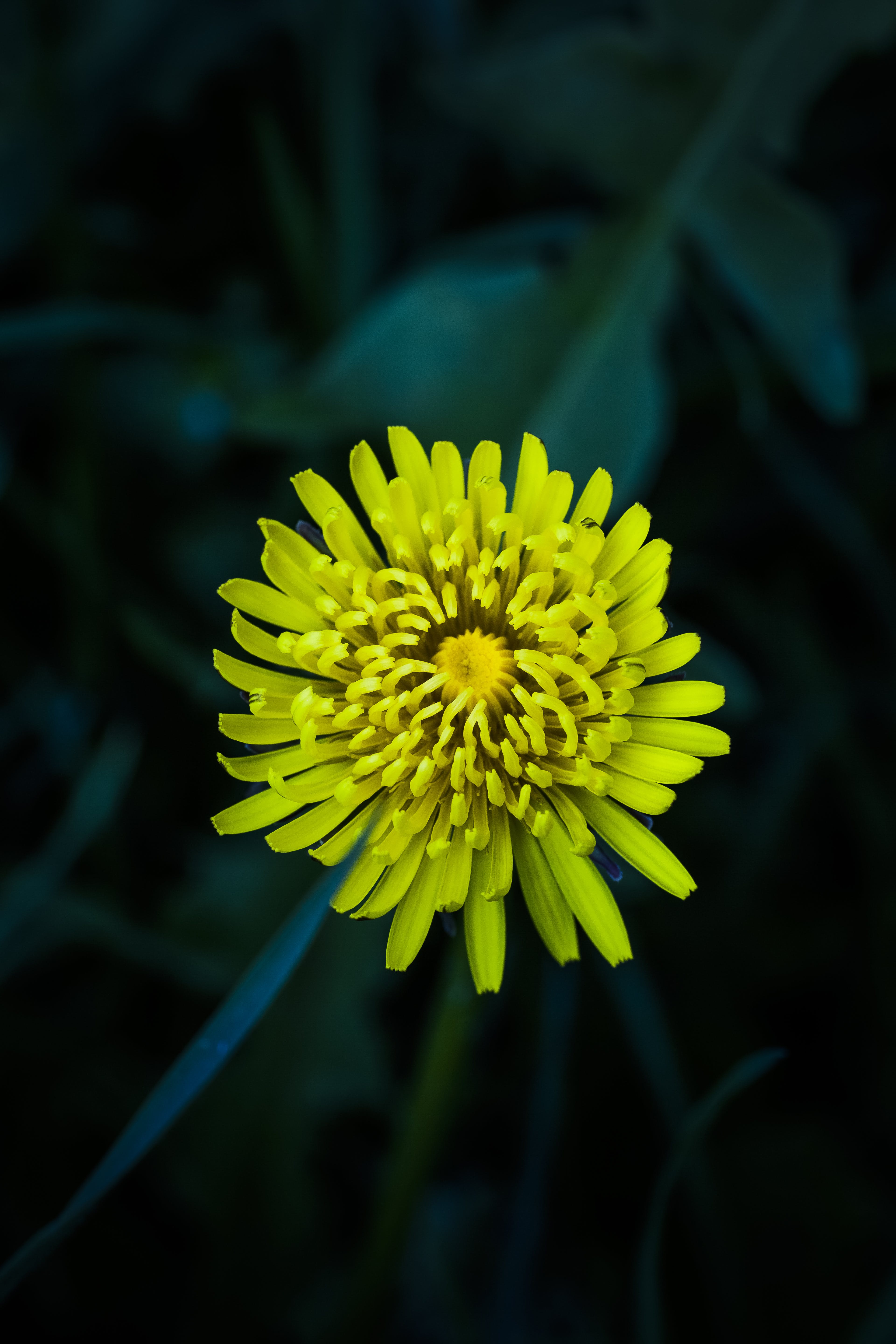 Yellow Petaled Flower Selective-focus Photography