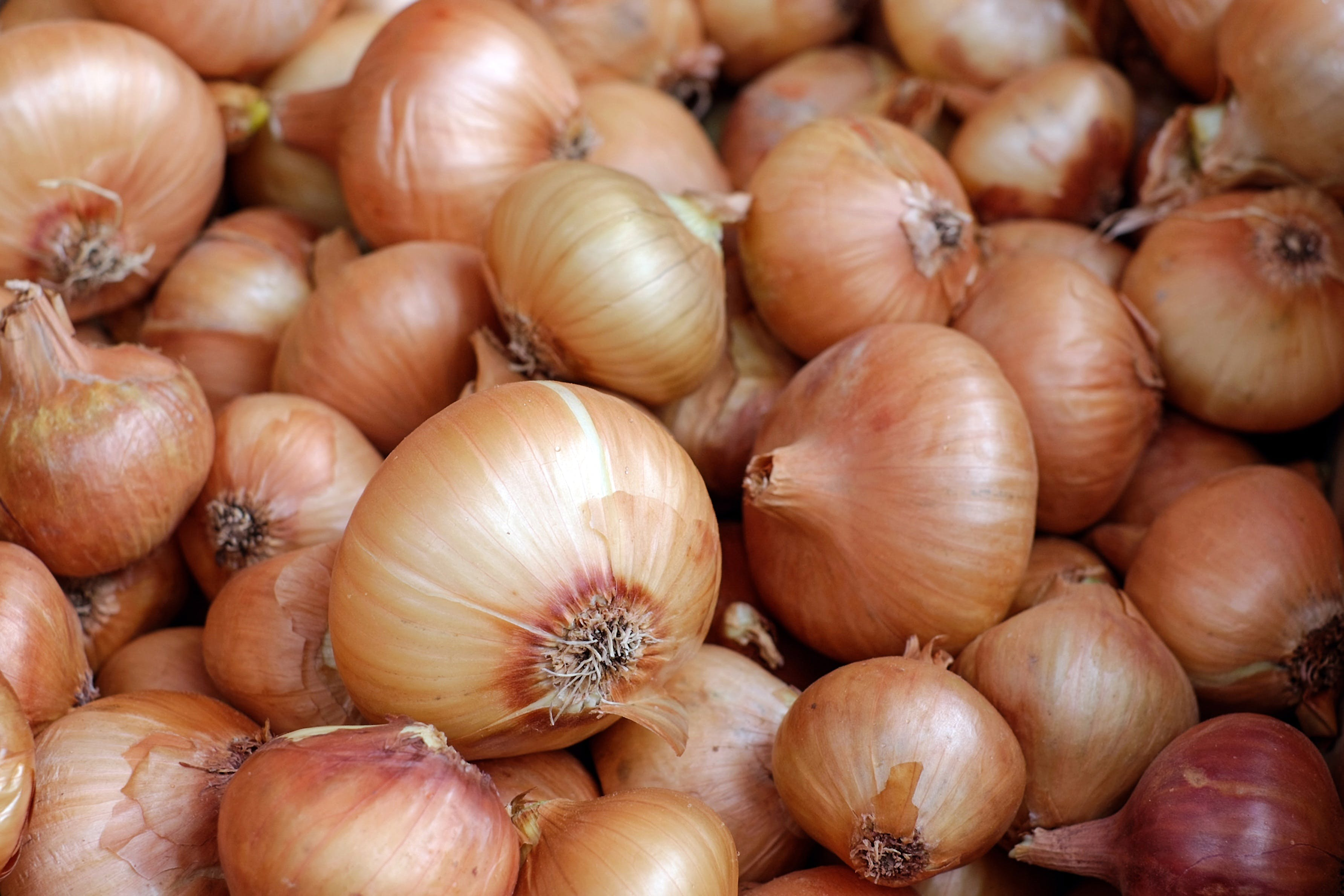 Free stock photo of food, healthy, onions, royalty free