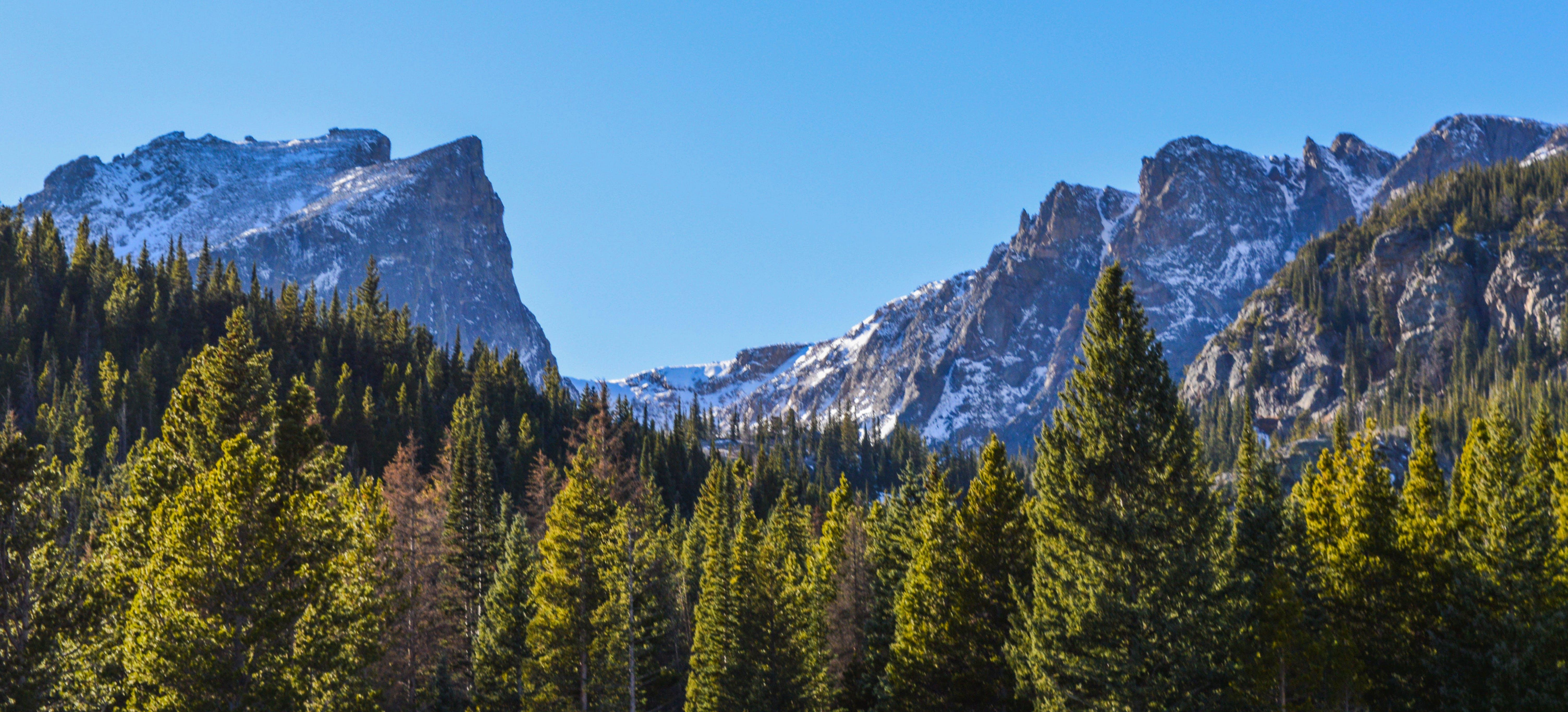 Green Tall Trees Near Mountains