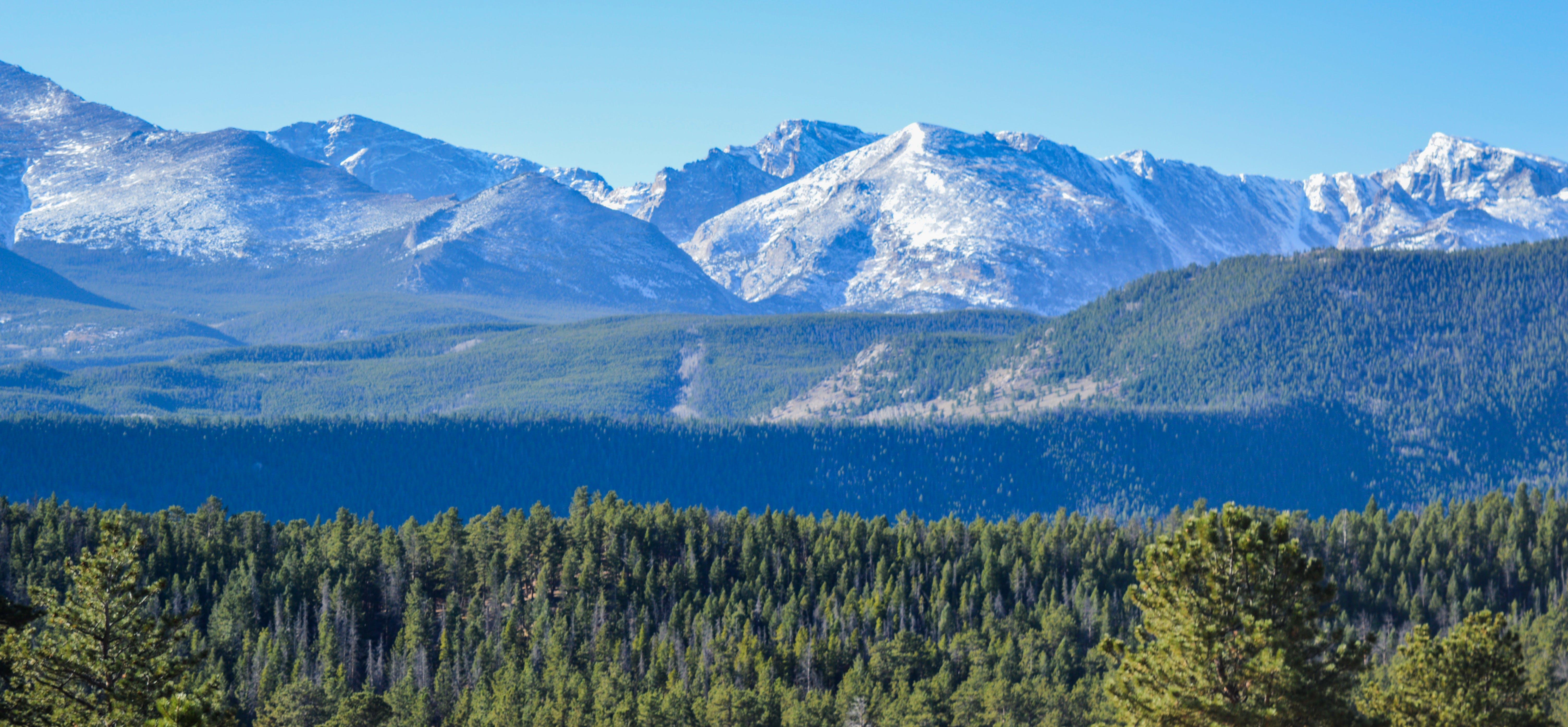 Imagine de stoc gratuită din arbori, cer, conifer, maiestuos