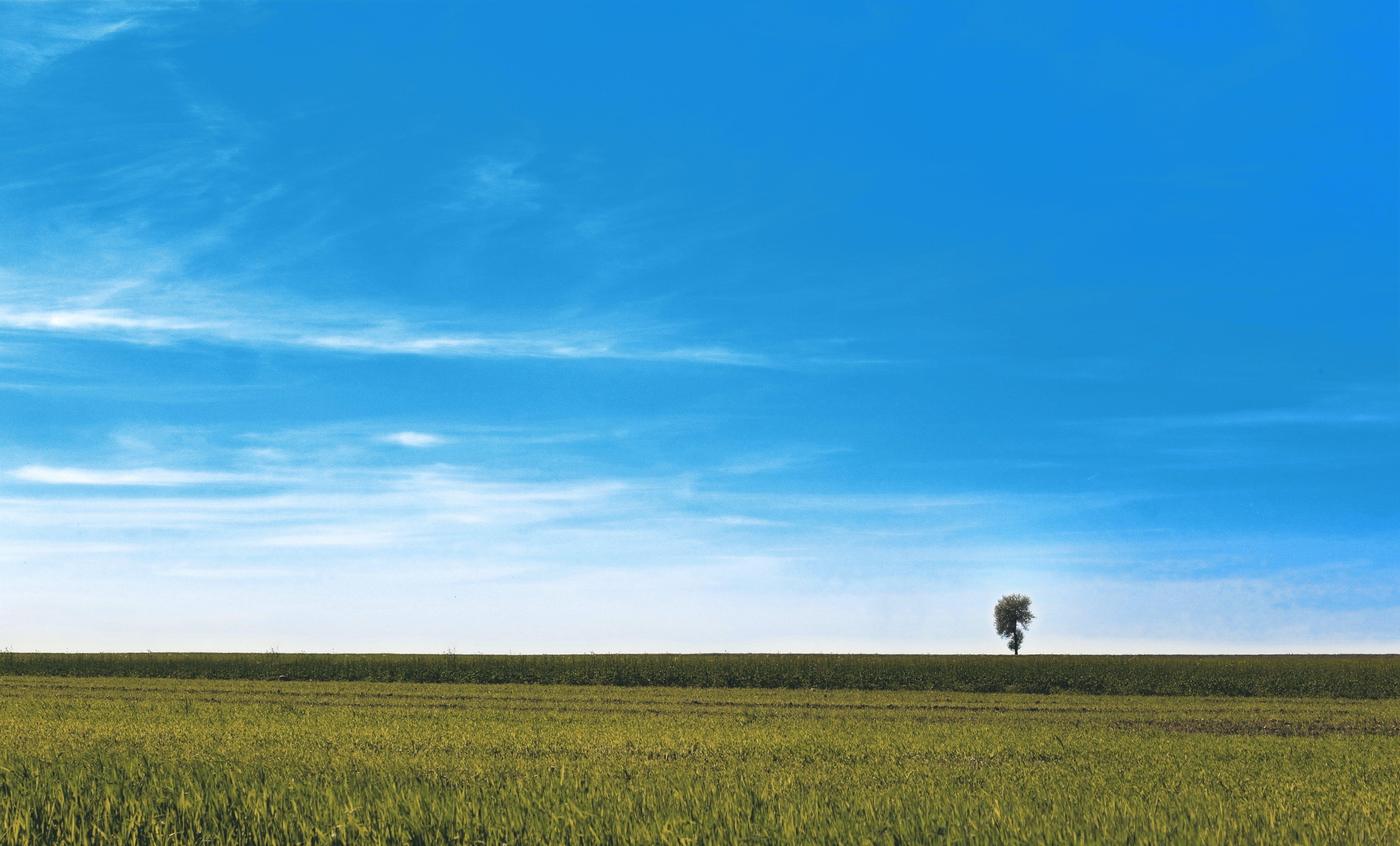 Free stock photo of meadow, sky