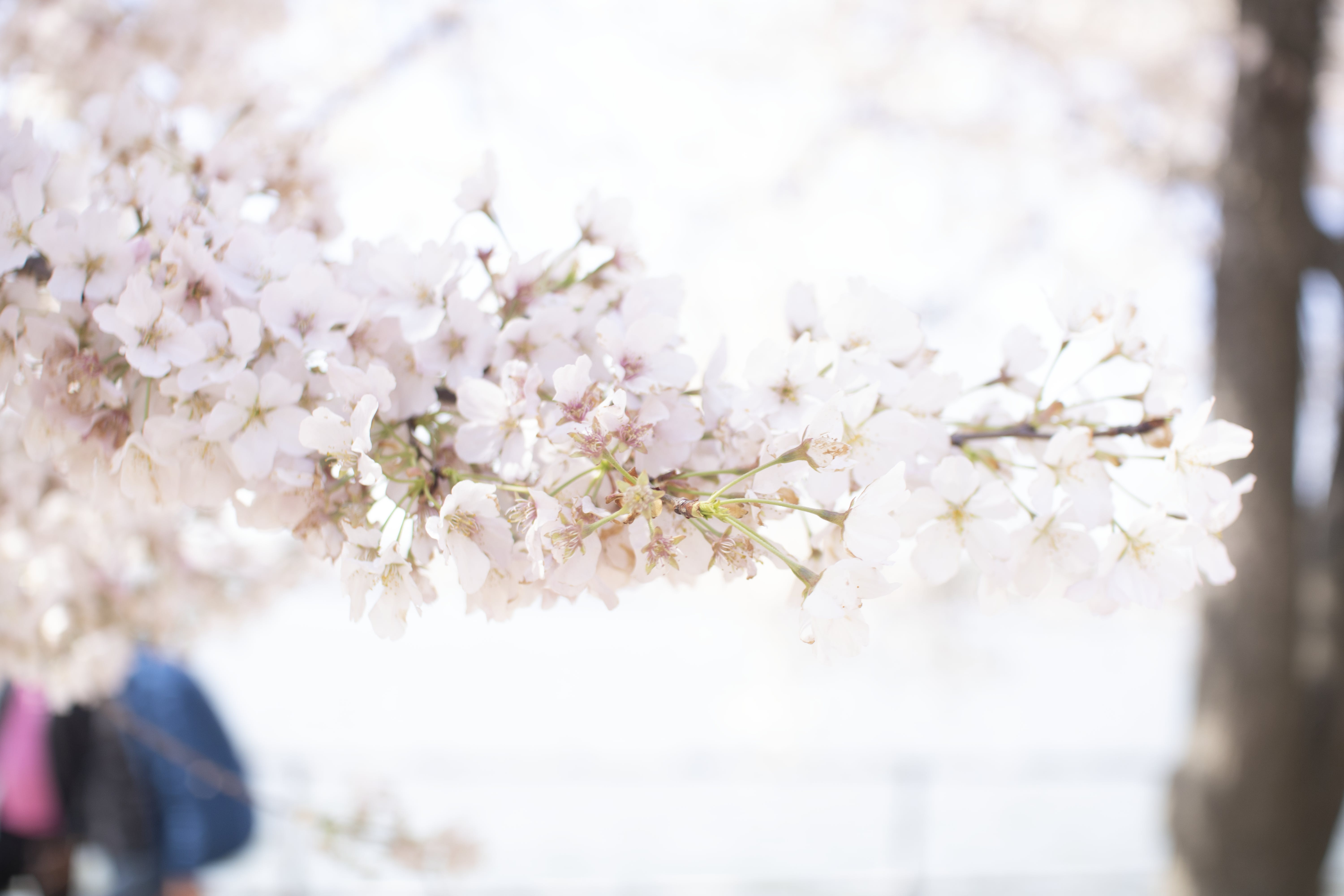 Free stock photo of beautiful, bloom, blooming, blur