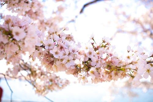 Fotobanka sbezplatnými fotkami na tému deň, detailný záber, exteriéry, flóra