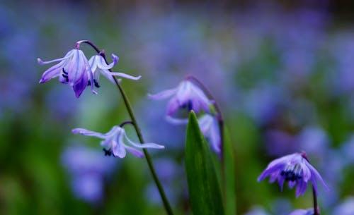 Gratis stockfoto met bloeiend, bloemachtig, bloemblaadjes, bloemen