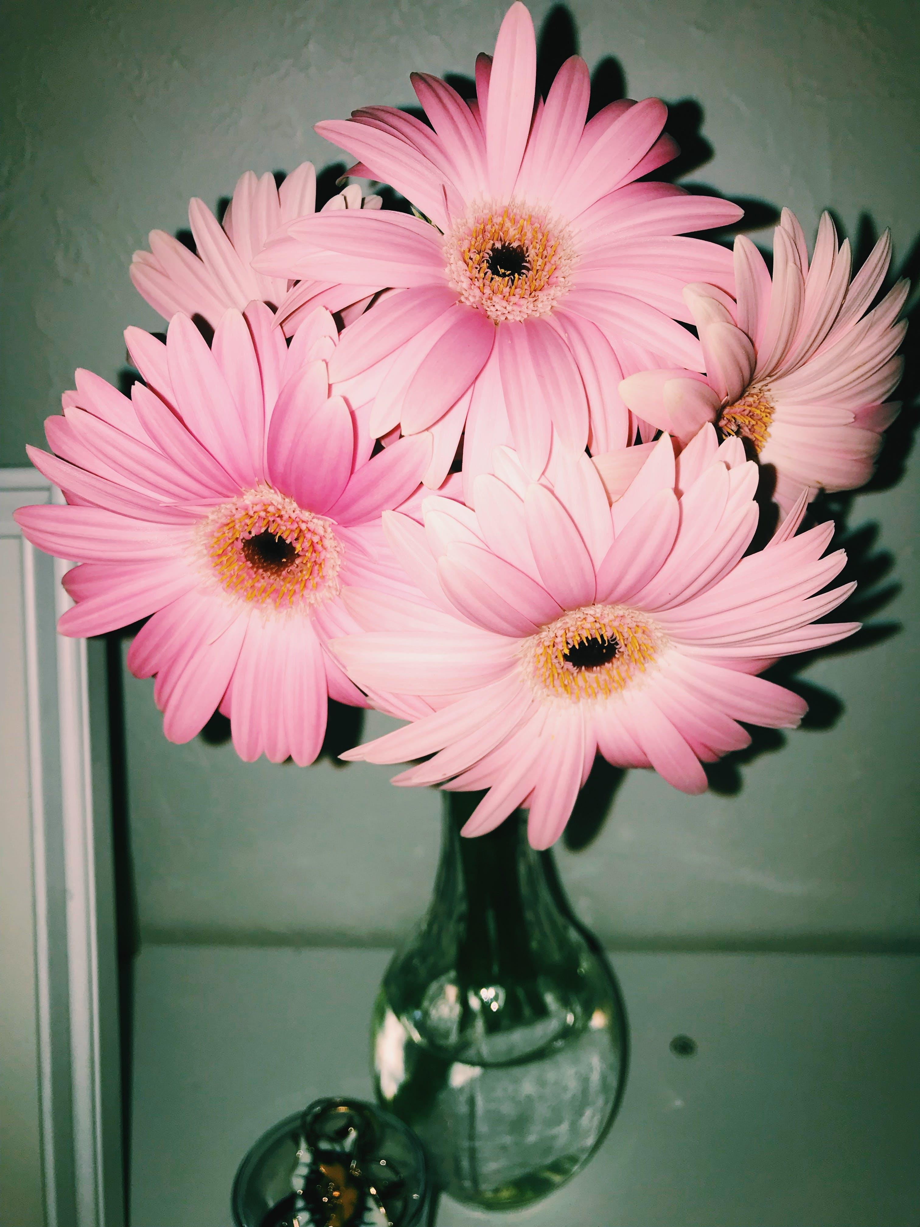 Free stock photo of #flower