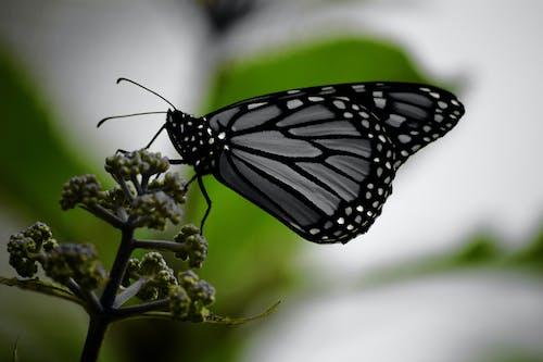 Fotos de stock gratuitas de brotes, insecto, macro, mariposa
