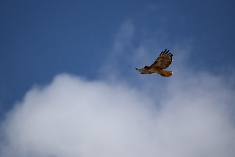 Gratis lagerfoto af høg, overskyet himmel