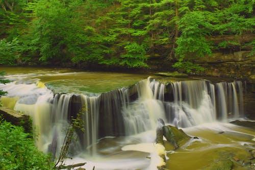 Ilmainen kuvapankkikuva tunnisteilla joki, luonto, puut, vesi