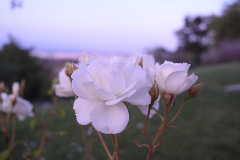 Gratis lagerfoto af bane, blomst, blomster, blomstrende
