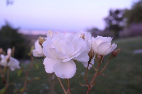 Ảnh lưu trữ miễn phí về cận cảnh, cánh hoa, cánh đồng, cây