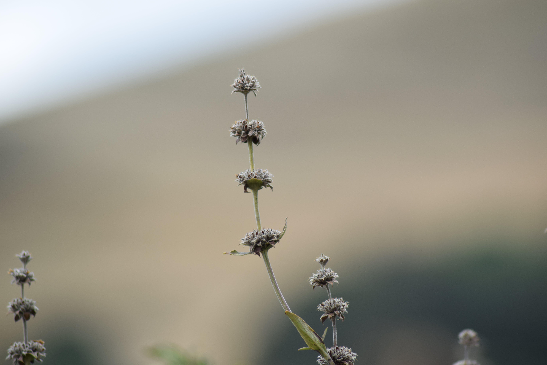 Gratis lagerfoto af frø, gren, omgivende, tør blomst