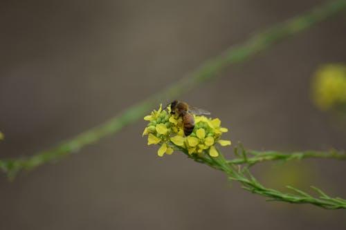蜂, 黄色い花の無料の写真素材