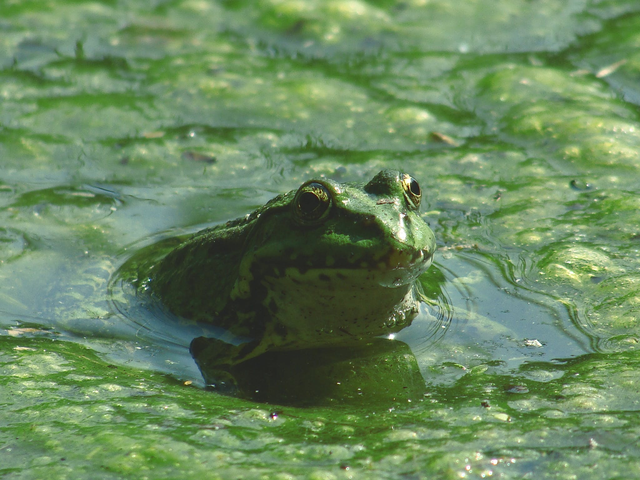 Frog on Body of Water during Daytime