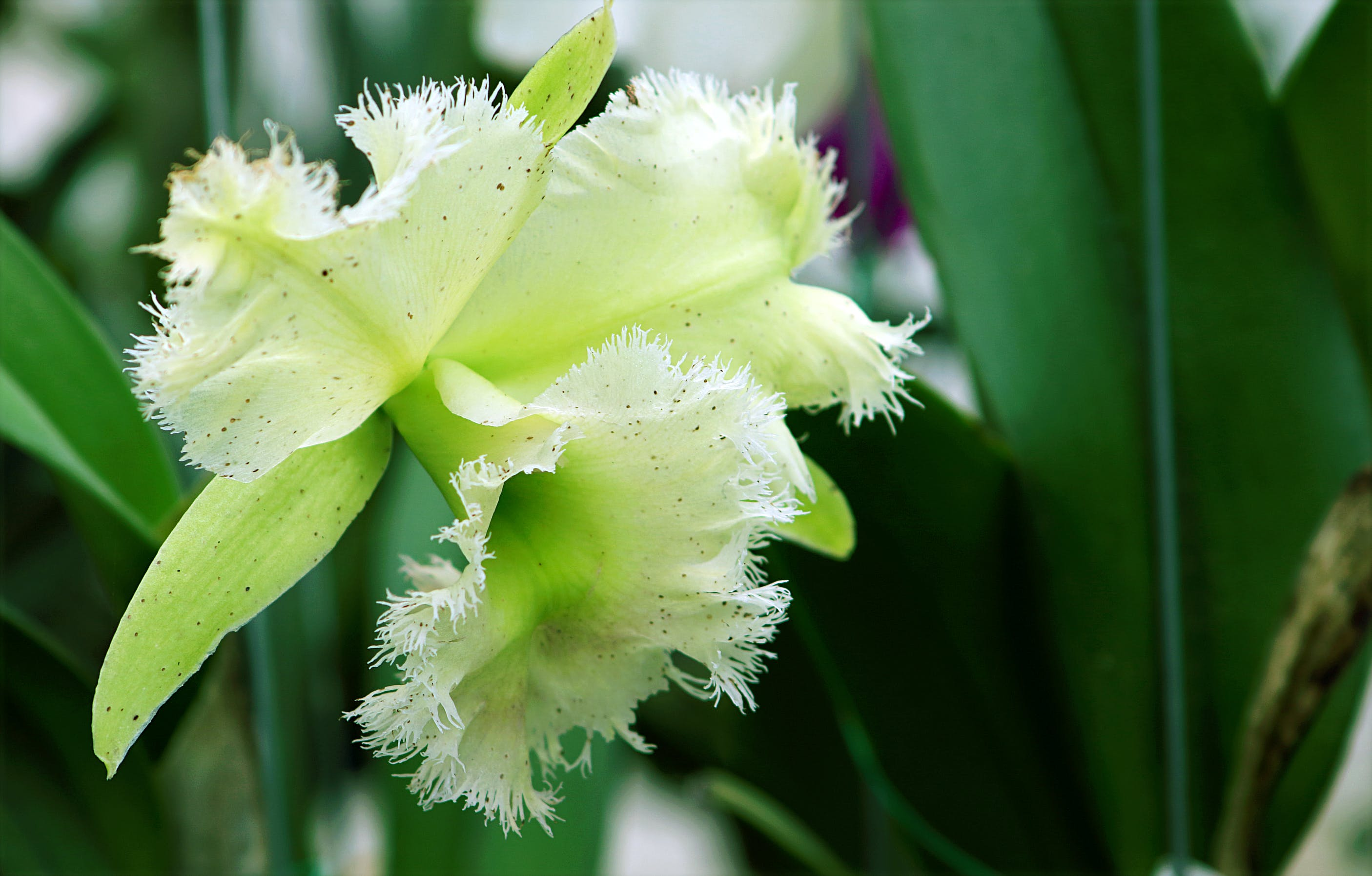 Close Photography of Green Orchid Flower