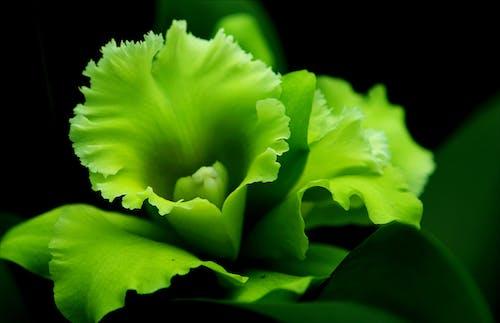 Ảnh lưu trữ miễn phí về cận cảnh, kết cấu, màu xanh lá, nở hoa