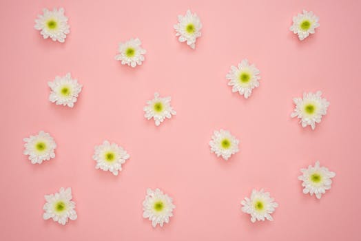 1000 great flower background photos pexels free stock photos white and yellow flower on pink wall mightylinksfo