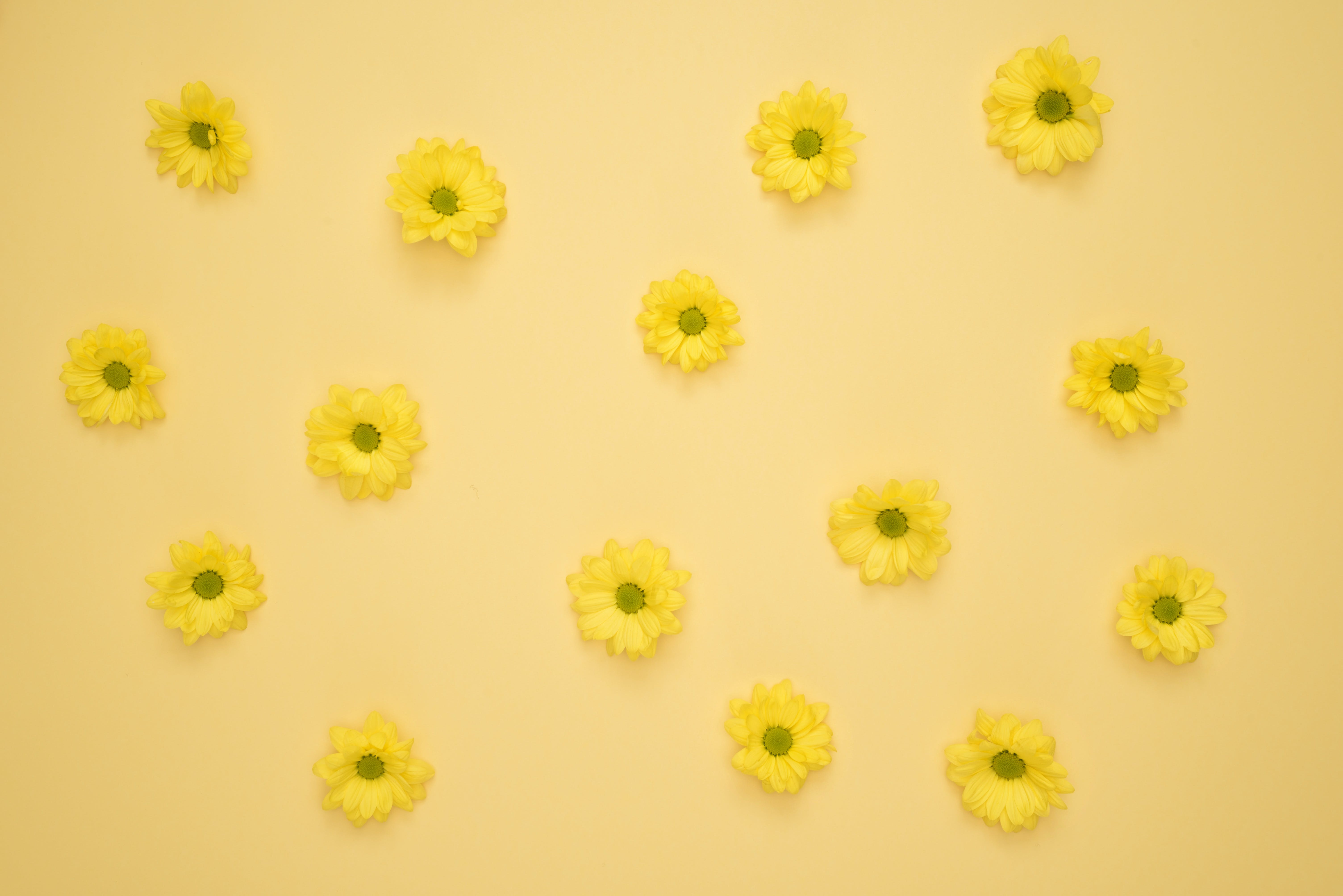 Yellow Daisies Laid on Yellow Surface