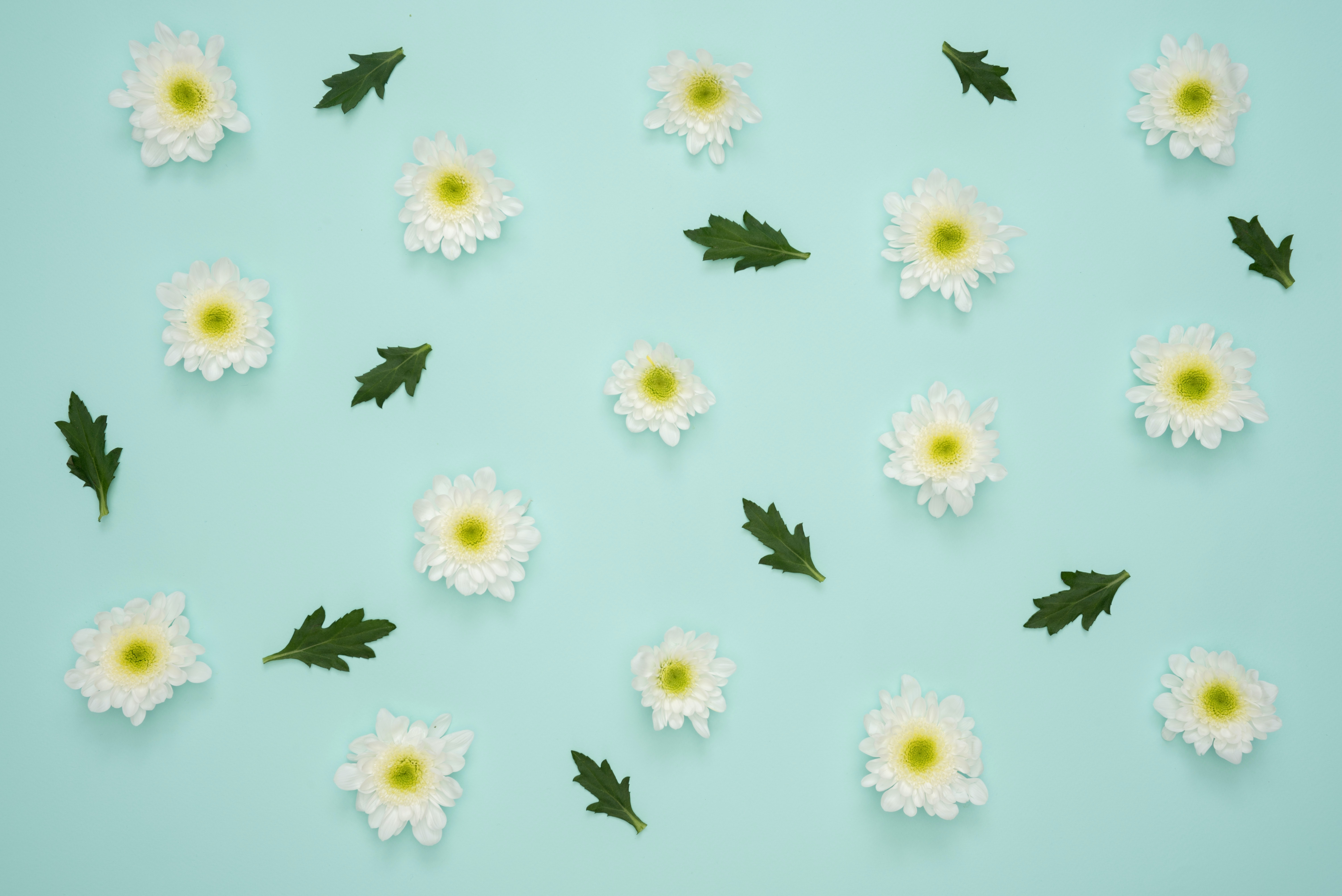 White Flowers And Leaves Decor Free Stock Photo
