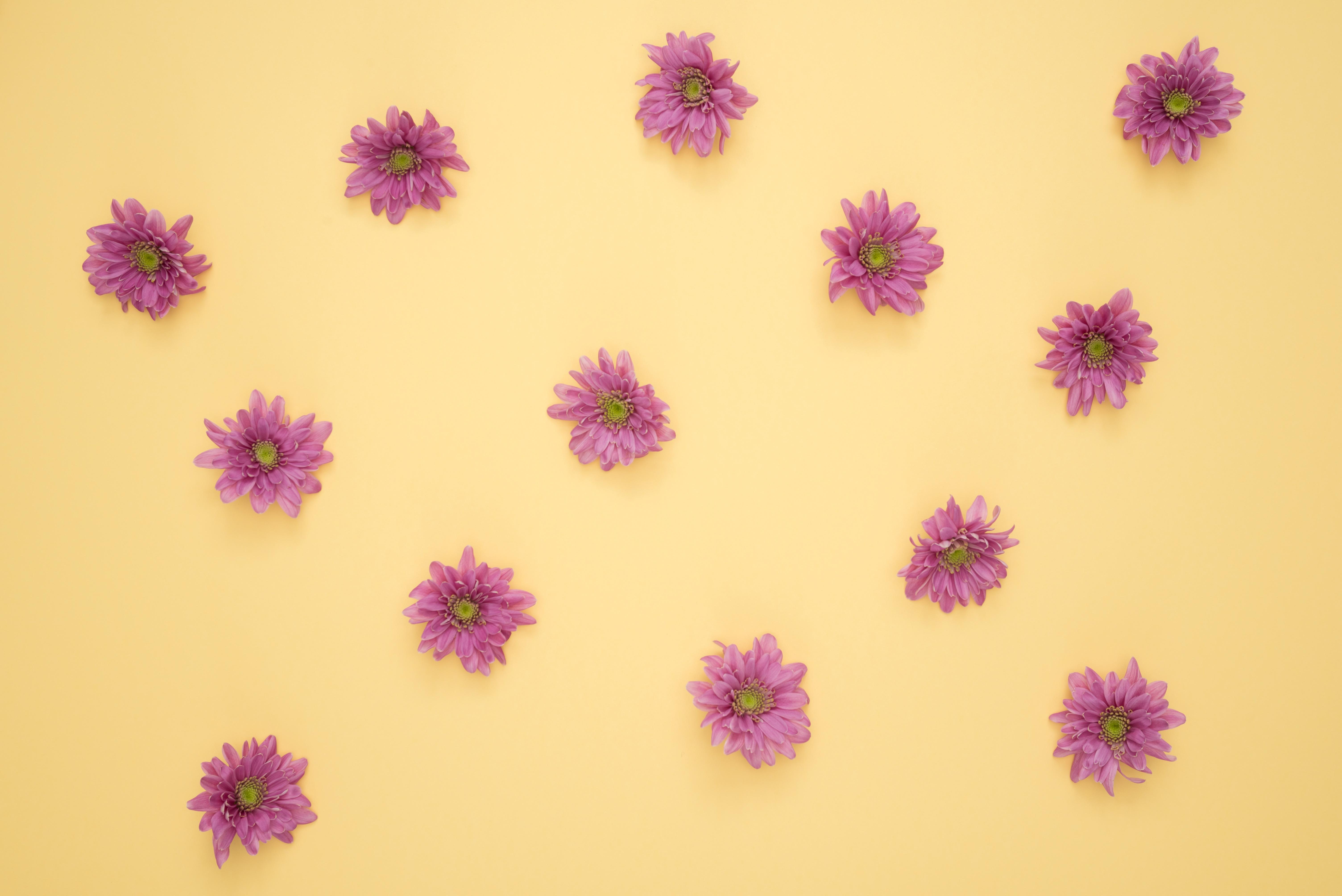 Pink Daisy Flower Lot