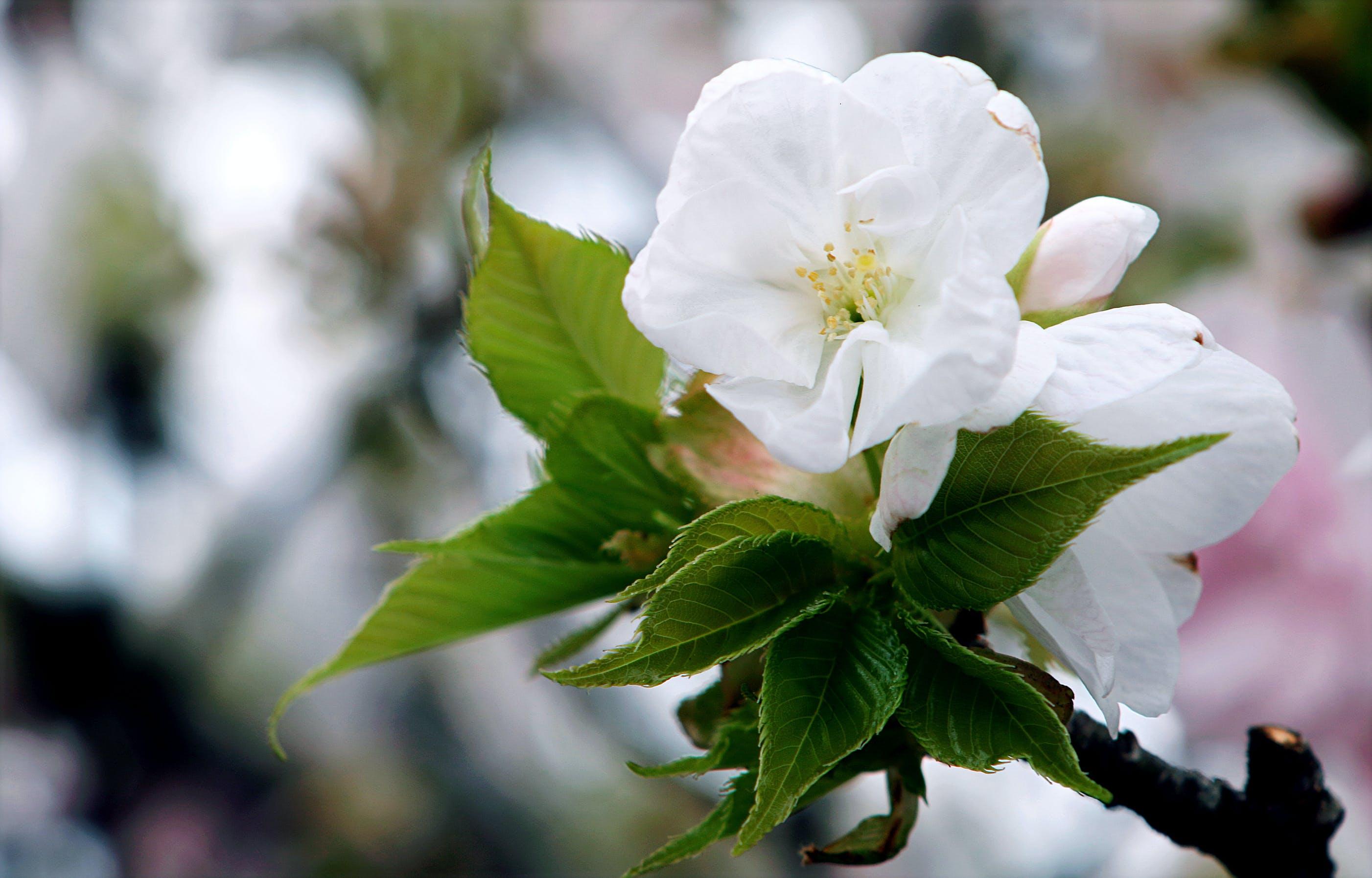 beyaz, bitki örtüsü, büyüme, çiçek içeren Ücretsiz stok fotoğraf