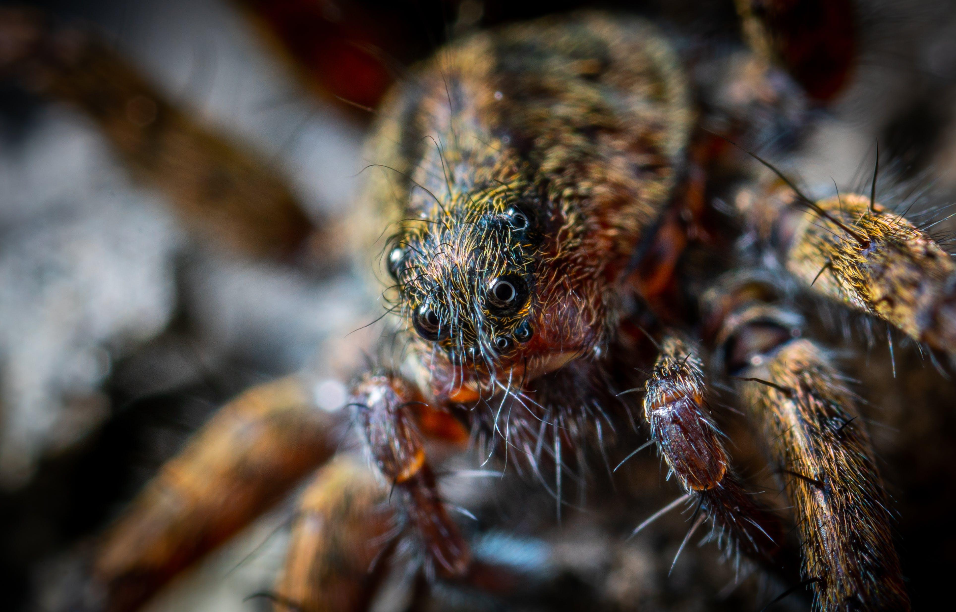 Free stock photo of portrait, macro, spider, arachnid