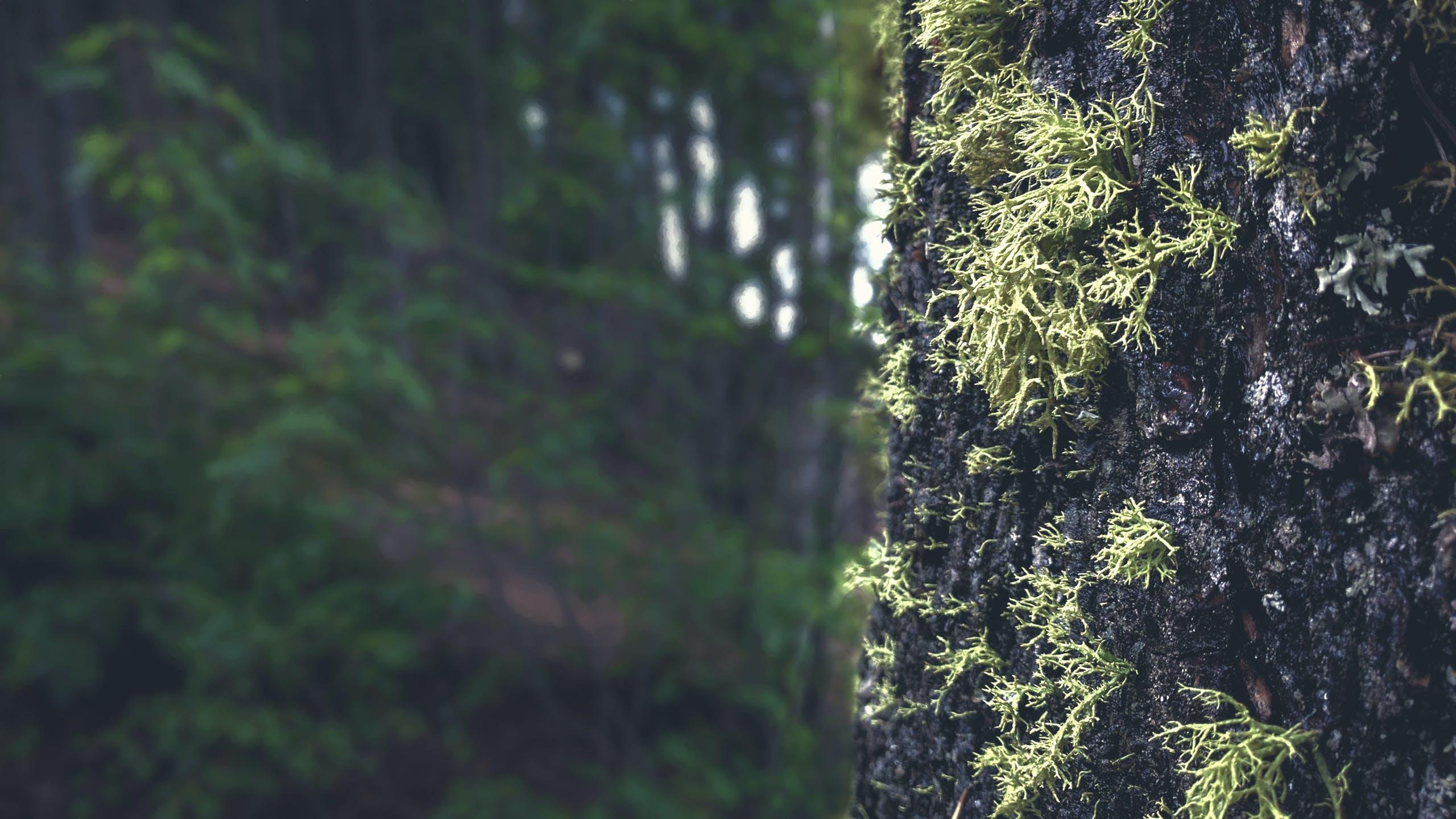 Foto d'estoc gratuïta de arbres, bosc, molsa, natura