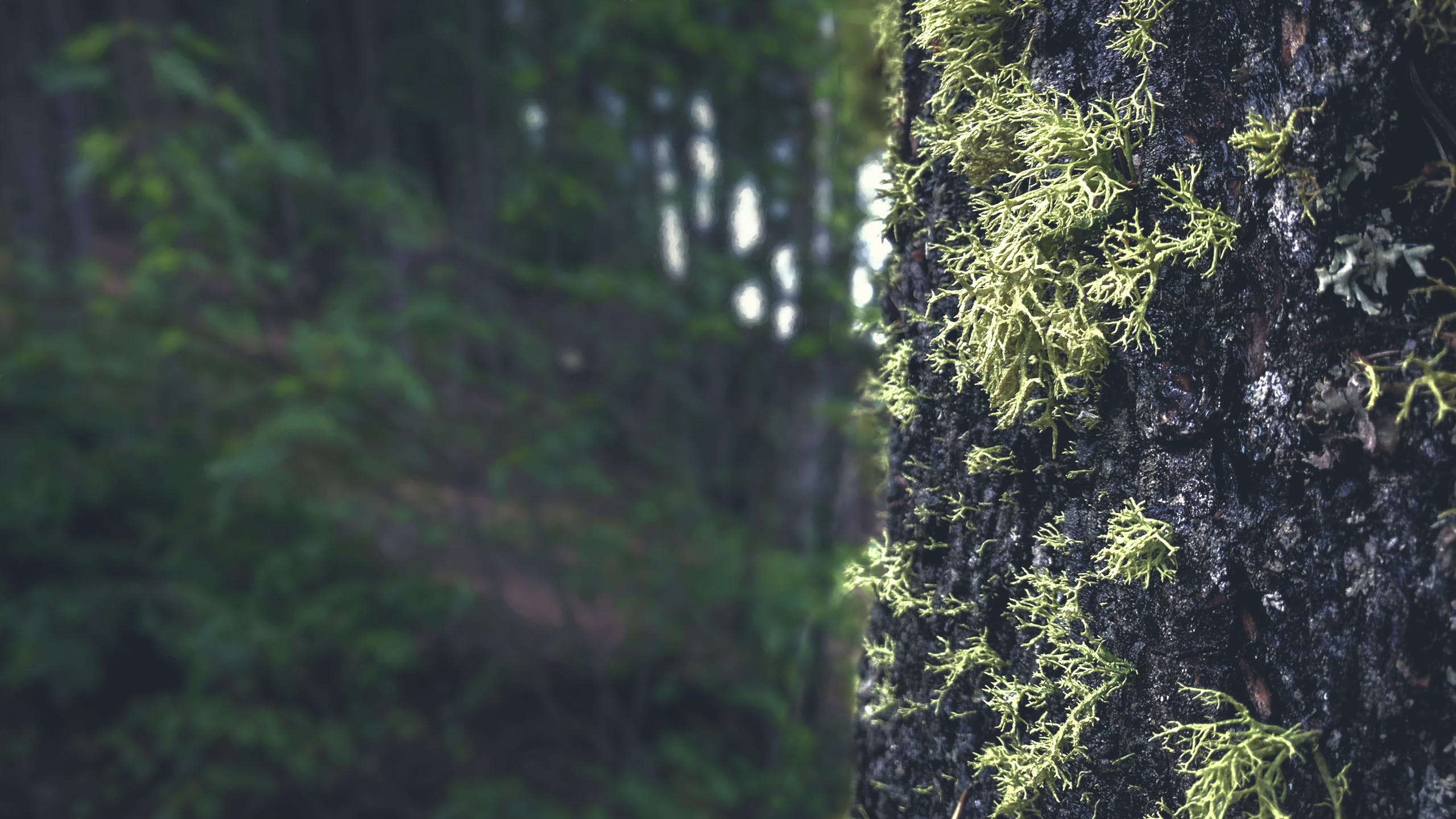 Free stock photo of nature, forest, trees, moss