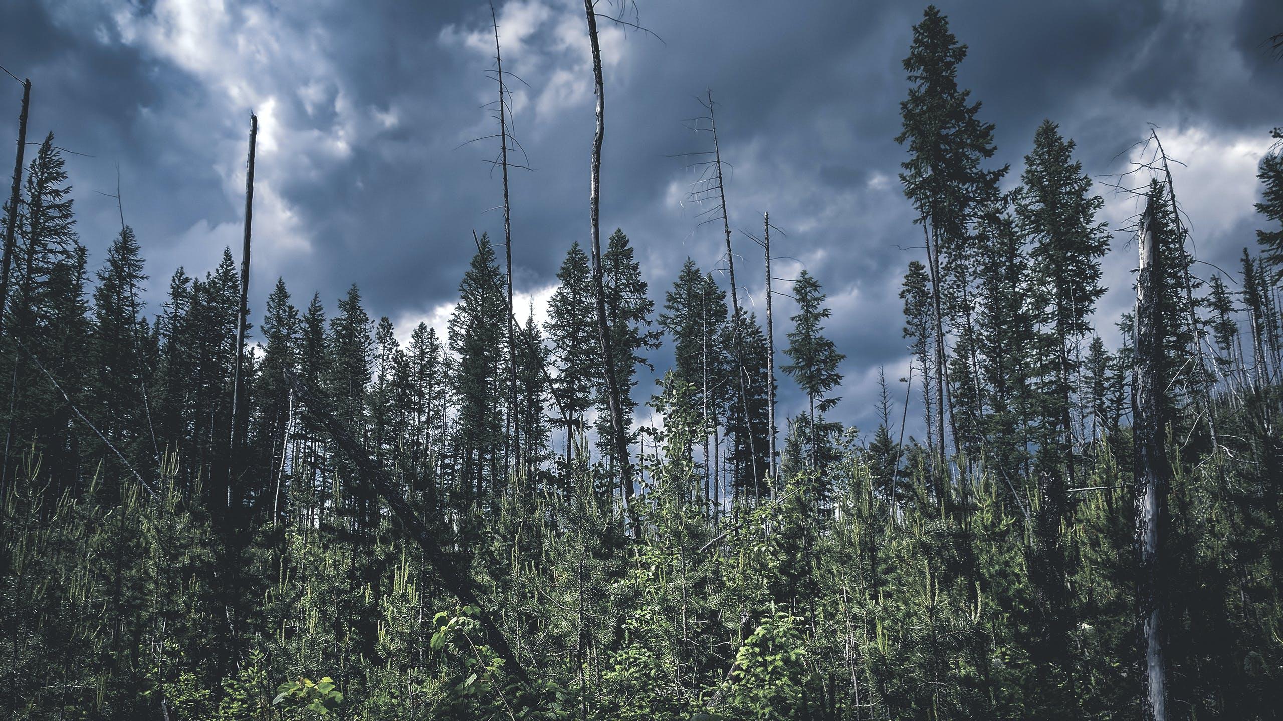 Foto d'estoc gratuïta de arbres, cel, fores, natura