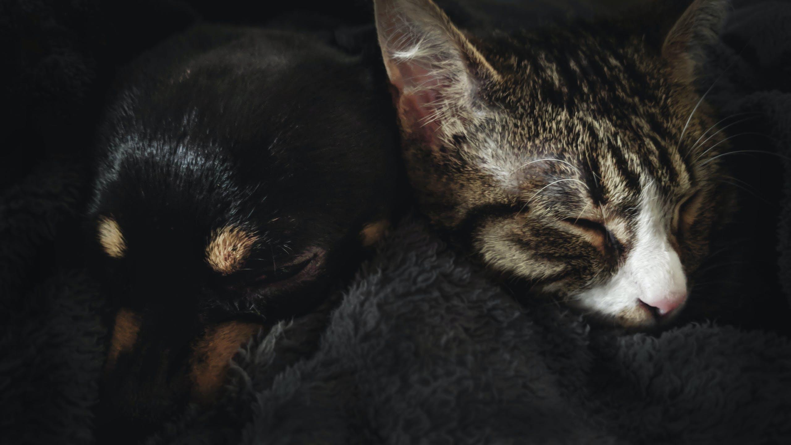 Foto d'estoc gratuïta de amics, aww, gat, gatet