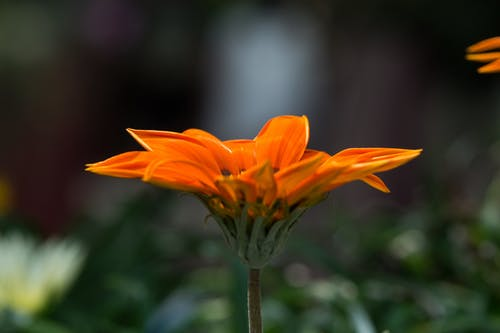 Orange Petaled Flower Selective Focus Photography