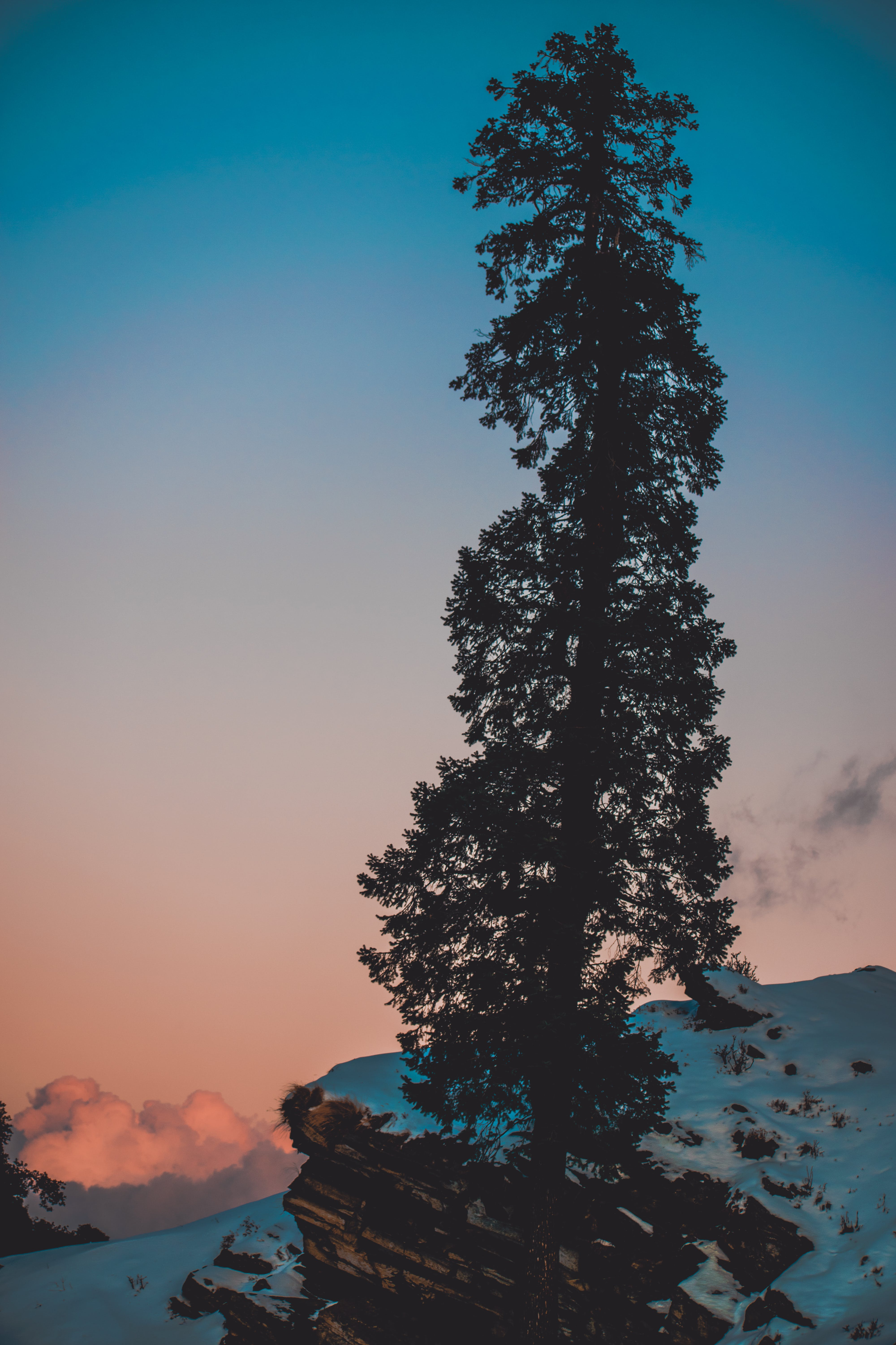 Pine Tree on Snow Covered Hill Under White and Blue Sky at Daytime
