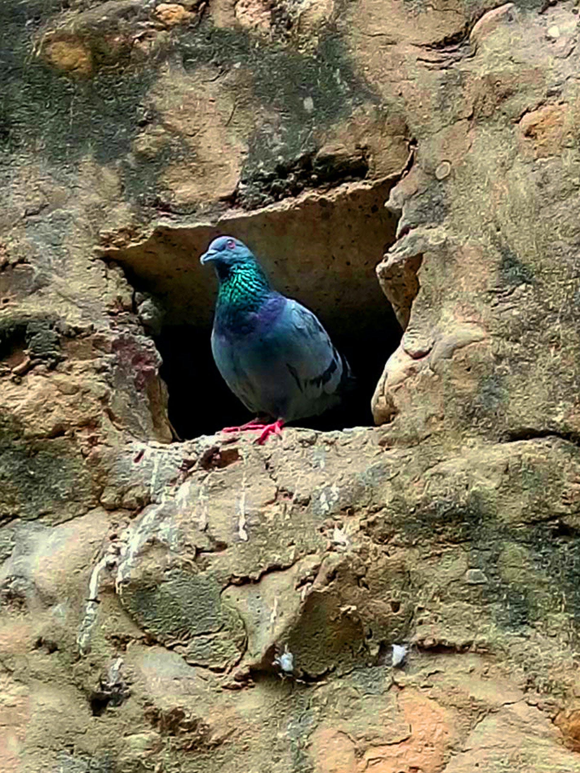 Free stock photo of #bird, bird house, peacock, peacock feathers