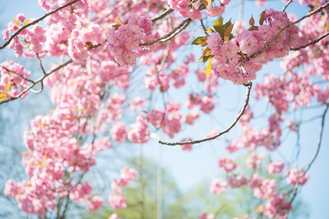 가지, 계절, 꽃