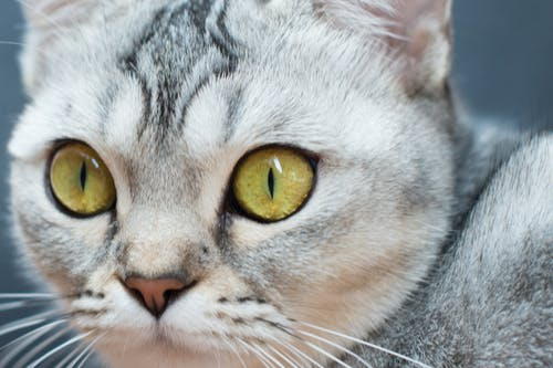 Close View of a Cat's Face