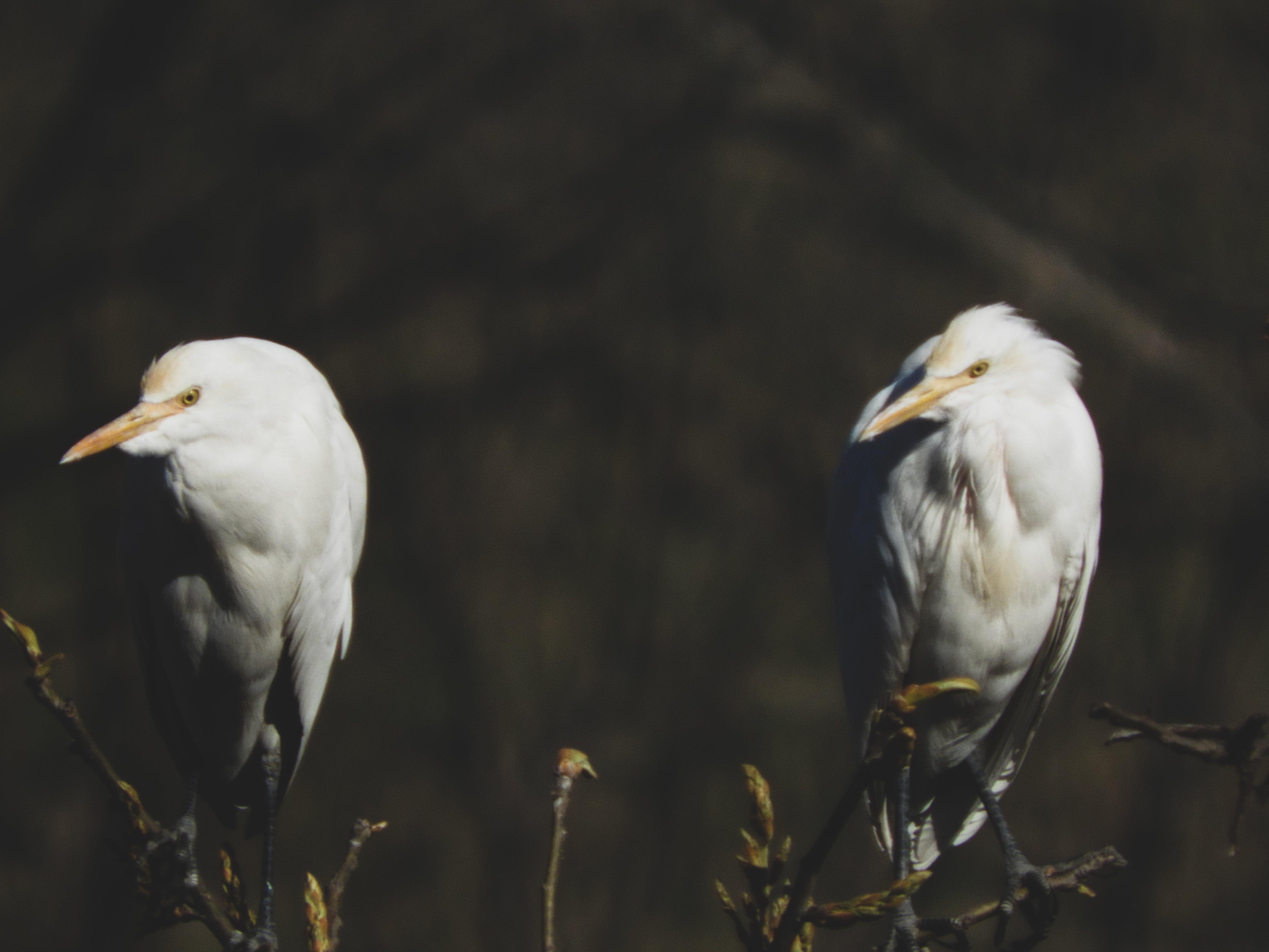 Darmowe zdjęcie z galerii z bagno, obserwowanie ptaków, pióro, światło dzienne