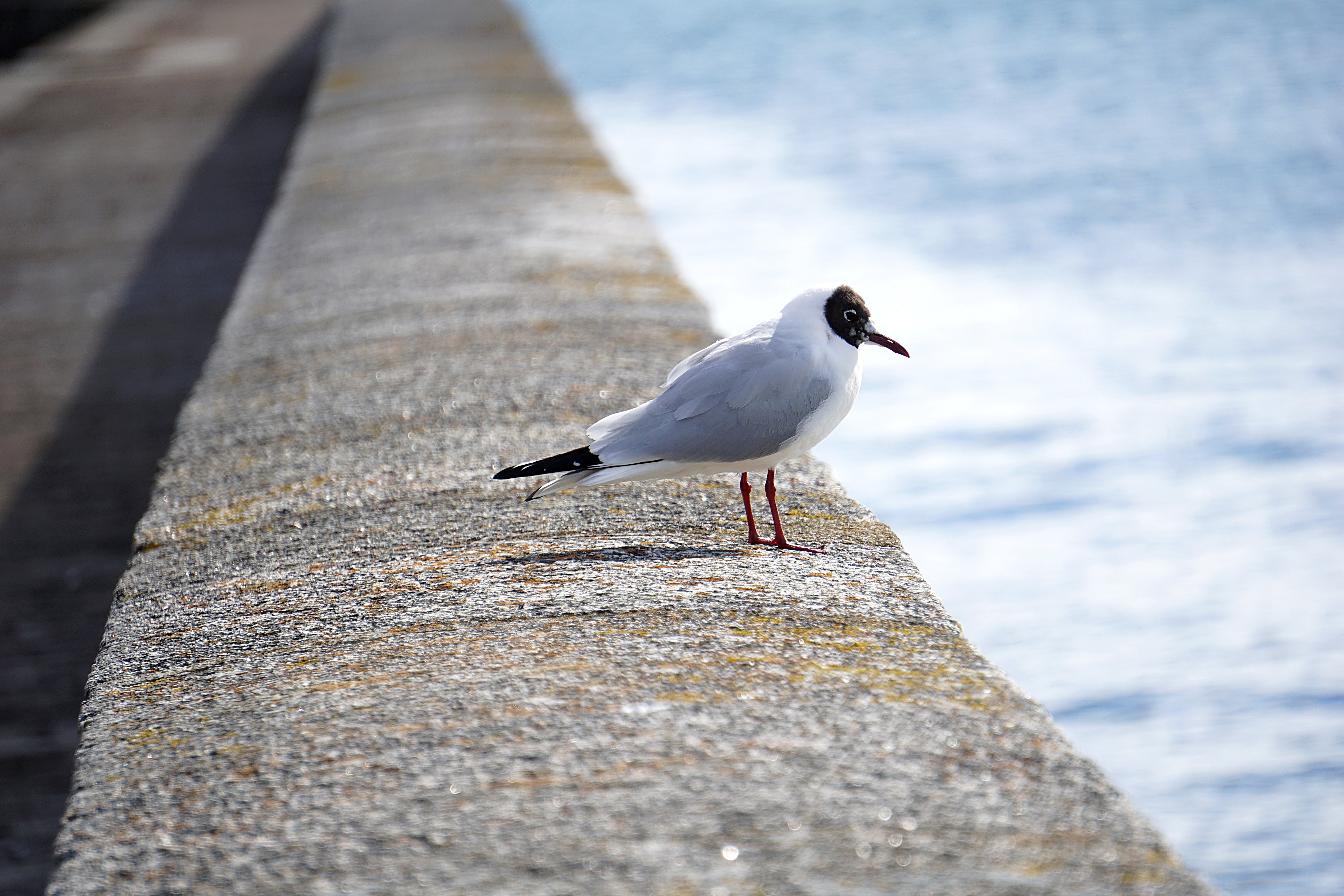 White Gray and Black Bird on Gray Concrete Beside Blue Body of Water during Daytime
