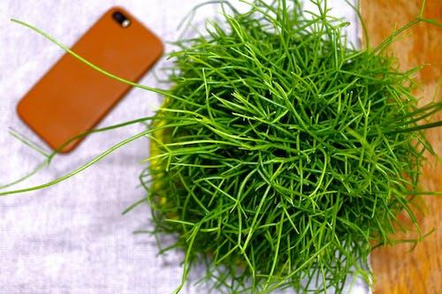 Gratis lagerfoto af grøn, plante, skrivebord