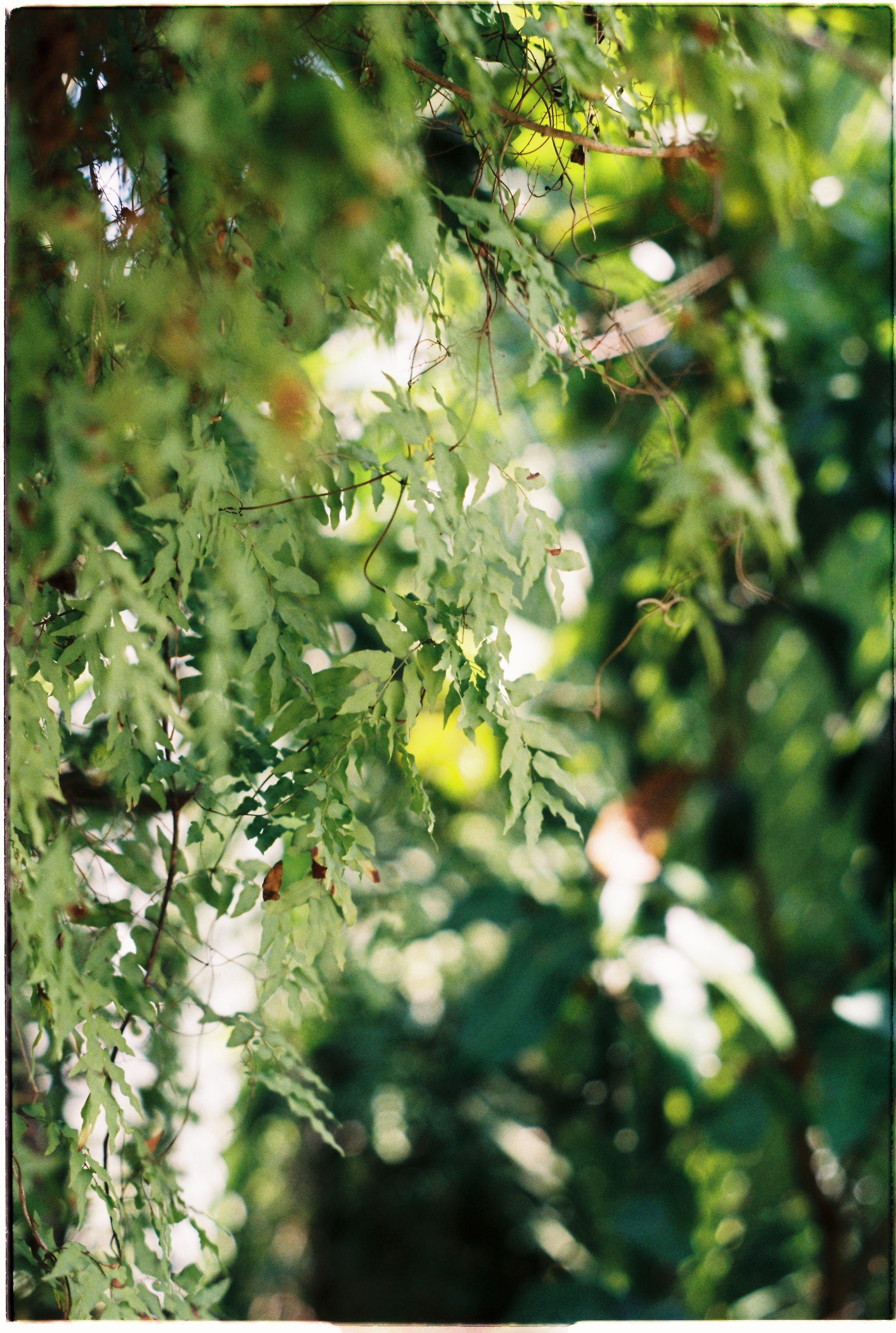 Photos gratuites de arbre, bois, branche, brillant