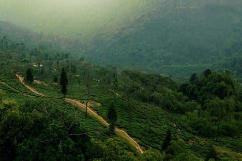 Základová fotografie zdarma na téma cesta, malebný, příroda, stromy