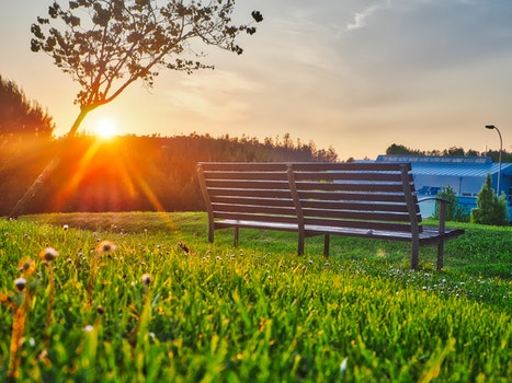 Brown Bench on Green Grass
