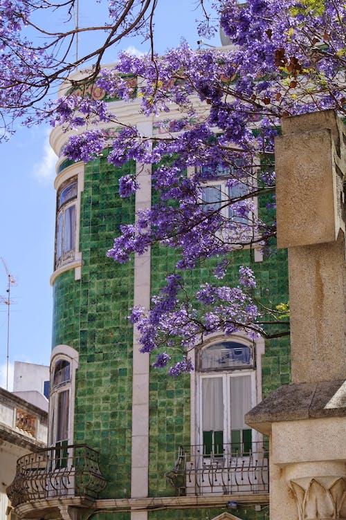 Бесплатное стоковое фото с голубое дерево