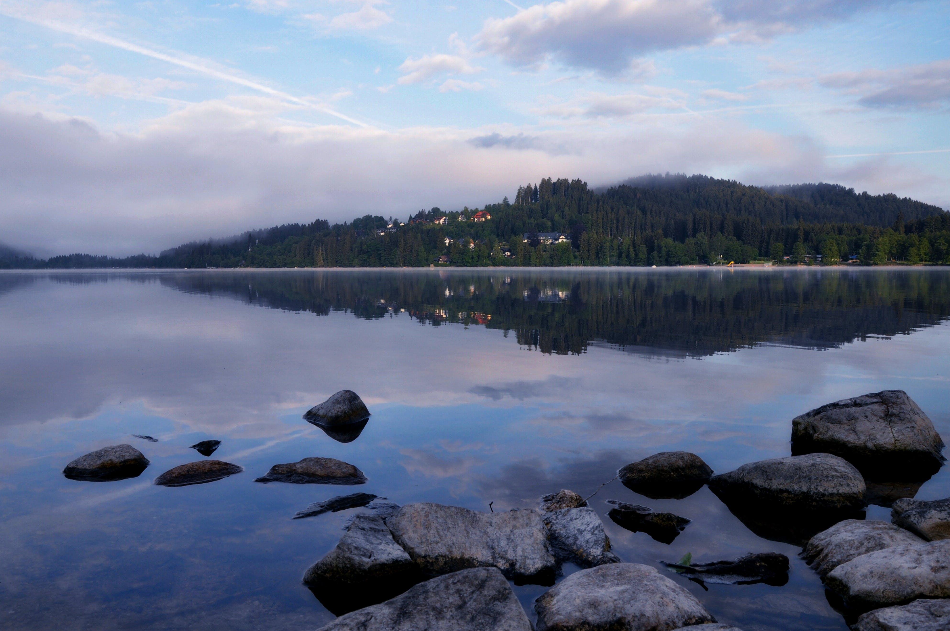 Imagine de stoc gratuită din apă, arbori, case, cer
