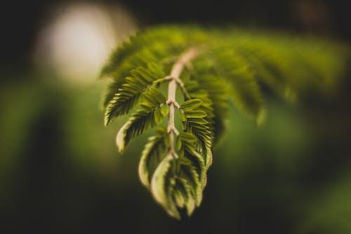 Immagine gratuita di #outdoorchallenge, albero, ambiente, bellissimo